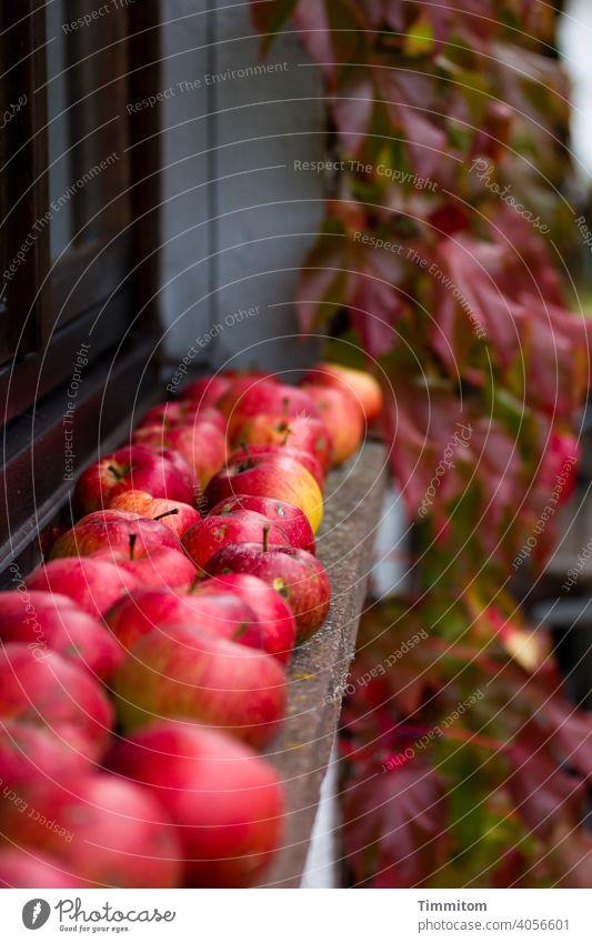 Äpfel auf Fensterbank, wilder Wein dazu Apfel reif Haus Wand Wilder Wein Herbst Selbstversorger Harmonie Pflanze Frucht Lebensmittel organisch frisch Ernte