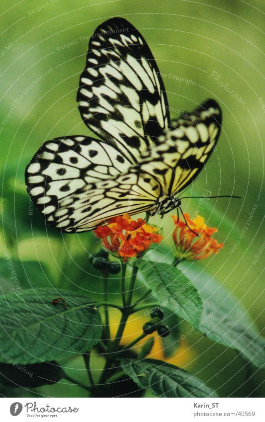 Schmetterling grün Sonne Sommer Blume