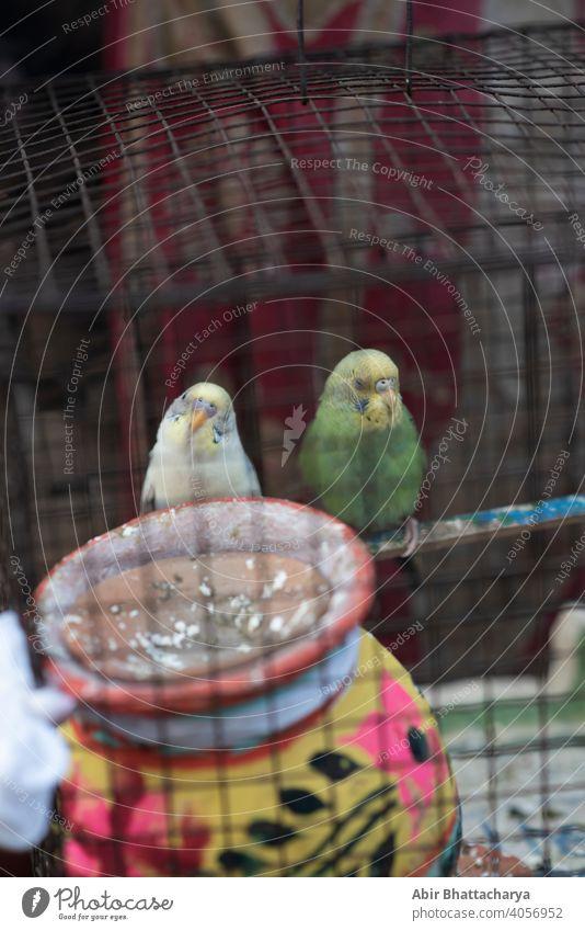 zwei Vögel in einem Käfig sitzen in einer nachdenklichen Stimmung Paar pulsierend farbenfroh Feder Flügel Schnabel Tier schön