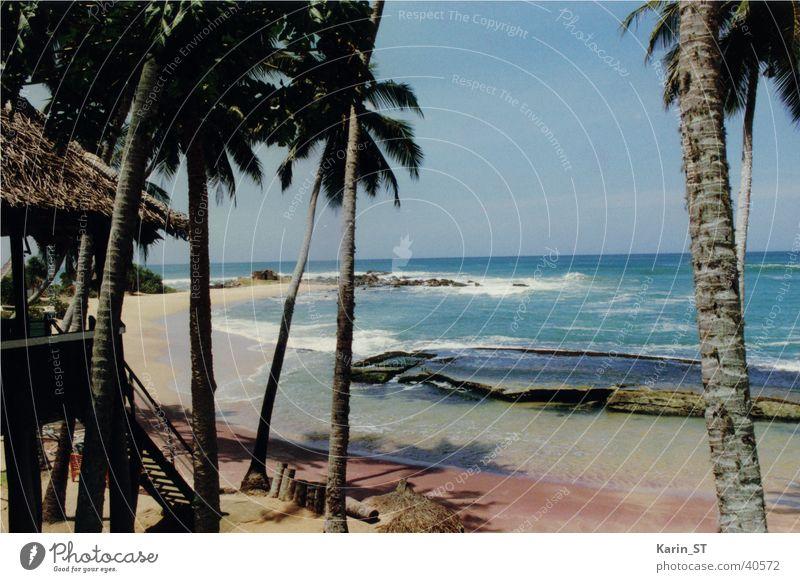 Der perfekte Strand... Sonne Meer blau Ferien & Urlaub & Reisen Sand Wetter Palme Sri Lanka