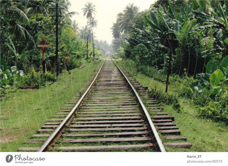 Einbahn durch den Dschungel Sri Lanka Gleise Einbahnstraße Urwald Palme Ferien & Urlaub & Reisen grün Eisenbahn Himmel
