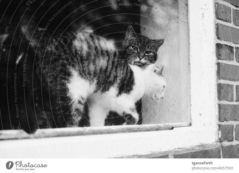 Katzen im Fenster Haustier Tier niedlich heimisch Säugetier Außenaufnahme Porträt Kätzchen Zusammensein Zwei Tiere katzenhaft Fell fluffig freigänger pelzig