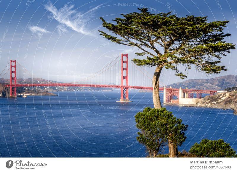 Golden Gate Brücke umrahmt von einer Zypresse San Francisco Goldenes Tor francisco Marinekopfland reisen Meer Architektur Wahrzeichen golden Tourismus Großstadt