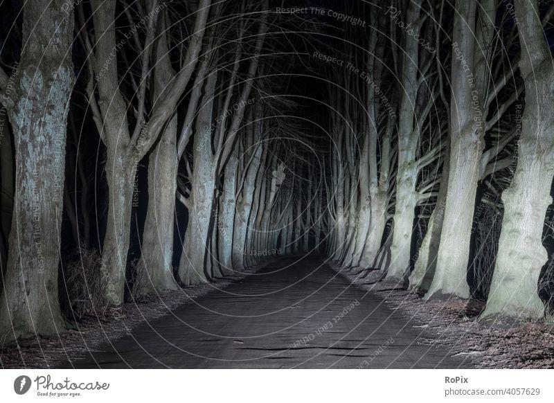 Eichenallee bei Nacht im Scheinwerferlicht. Wald Sonne Herbst Landschaft Weg Pfad Allee Feldweg Natur Waldweg Jahreszeit Witterung landscape Laub Wetter
