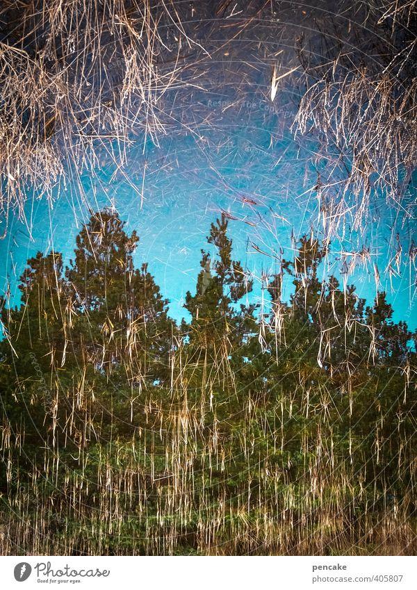 Rømø | photocaseblå Himmel Natur blau Wasser Landschaft Wald Frühling Schwimmen & Baden Erde Schönes Wetter Urelemente berühren Zeichen fallen tauchen Nordsee