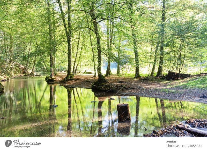 Ein Bach fließt gemütlich durch den Wald und wird gesäumt von frischen grünen Bäumen, die sich im Wasser spiegeln Frühling Holzstamm Spiegelung