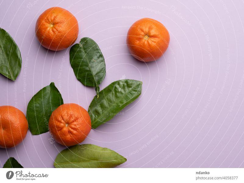 reife Mandarinen und grüne Blätter auf einem lila Hintergrund, Ansicht von oben flach Kulisse Menschengruppe orange Lebensmittel Vitamin Frische ganz roh