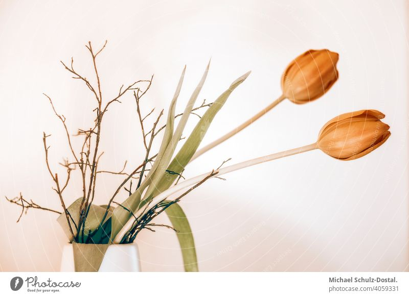 Zwei rote Tulpen in der weißen Vase Blume Pflanze Zierpflanze schön ruhig flower plant calm quiet grün green still stillleben deko tulpe tor weiss vase strauß