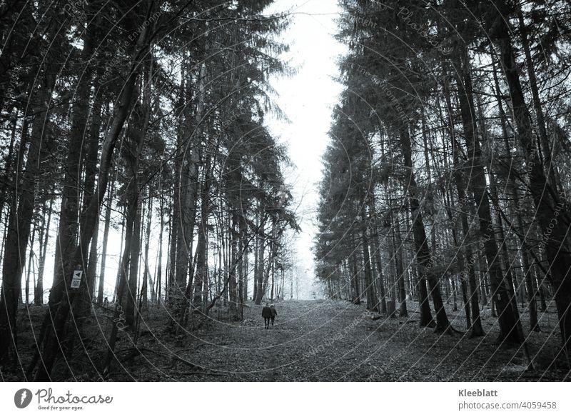 Gemeinsam den Weg entlang - Zwei Spaziergänger gehen einen breiten Waldweg zum Nebel hin entlang - schwarzweiß Bild Schwarzweißfoto Spaziergang Spazierweg
