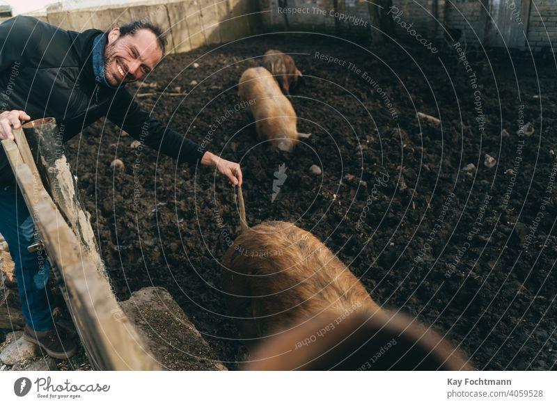 Lustiger Mann hebt den Schwanz eines Schweins landwirtschaftlich Ackerbau Tier Tierrechte Tiermotive Scheune Landschaft Bodenbearbeitung niedlich heimisch