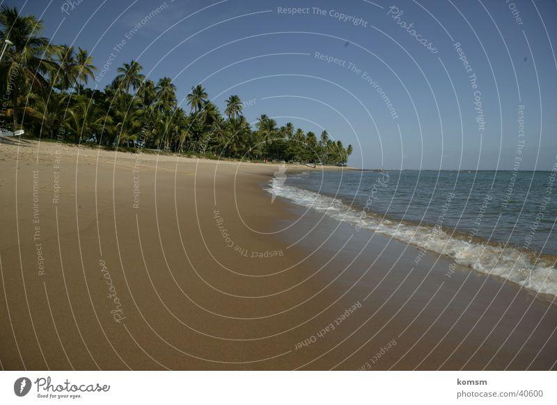 Strand Brasilien 02 Südamerika Meer Palme grün Wellen Brandung nass Physik Sonne Sand Himmel blau Graffiti Wasser Wärme