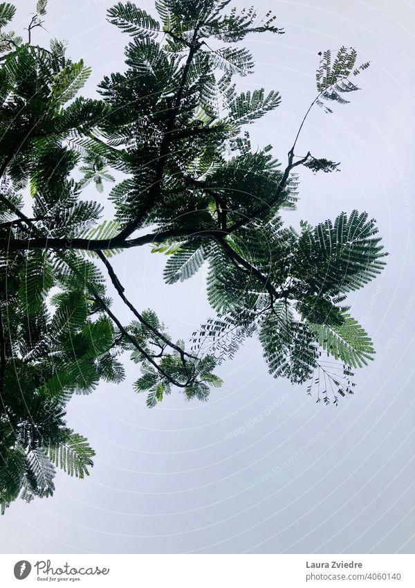 Unter dem tropischen Baum Tropischer Baum Tropen exotisch Pflanze Natur tropisches Klima Holz Blatt Schönes Wetter Sommer Ferien & Urlaub & Reisen grün