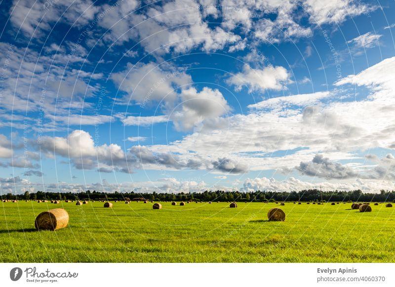 Feld ist voll von Heuballen mit weißen Wolken blauen Himmel während Spätsommer Nachmittag in Estland. Elektrische Drähte führen in den Wald. Scenic Sommertag