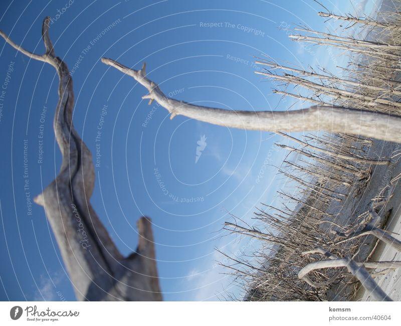 Stämme Natur Himmel blau grau Landschaft hoch Perspektive trist Ast Baumstamm
