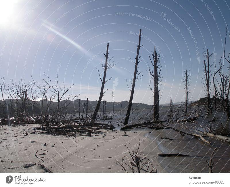 Einoede Natur Himmel Sonne blau Ferne grau Sand Landschaft Beleuchtung trist Ast