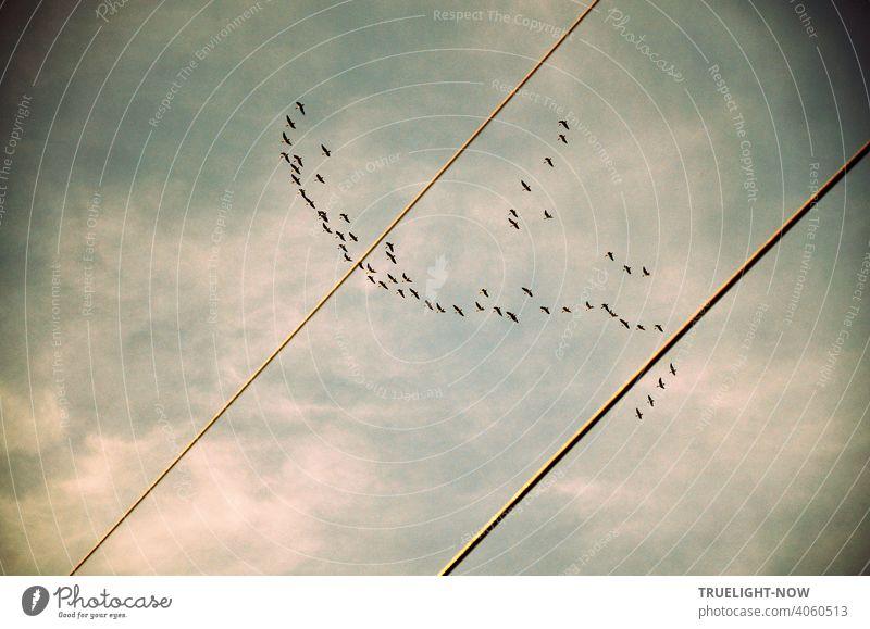 Kraniche? Wildgänse? Wildenten? Eine Schar Zugvögel fliegt in lockerer Formation am leicht bewölkten Himmel hoch über eine Stromleitung bei Caputh in Richtung Sommerquartier