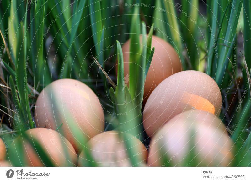 Bioeier Osternest im Grünen Eier Bioprodukte Biologische Landwirtschaft biologisch Osterei braune Eier nachhaltig Nachhaltigkeit ökologisch Gras verstecken grün
