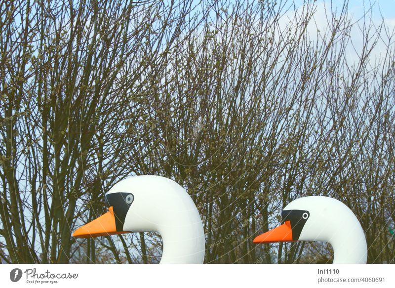 zwei Köpfe von Schwanen Tretbooten im Hintergrund Weidenkätzchen und blauer Himmel Teilansicht Plasitk Usedom Achterwasser lustig Sonnenschein Spaßvögel