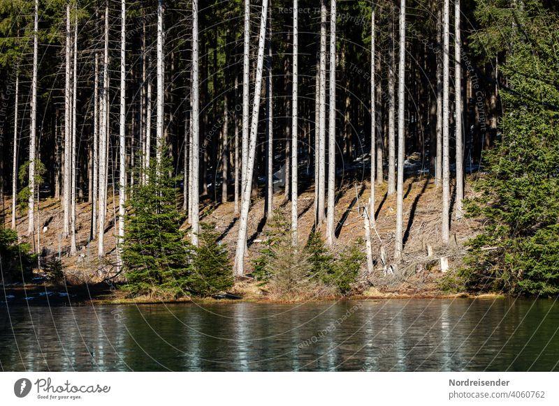 Kleiner Waldsee im Thüringer Wald wald waldsee wasser sumpf moor gras waldrand baum baumstämme gesund umwelt nachhaltig frühling wildnis erholung auszeit