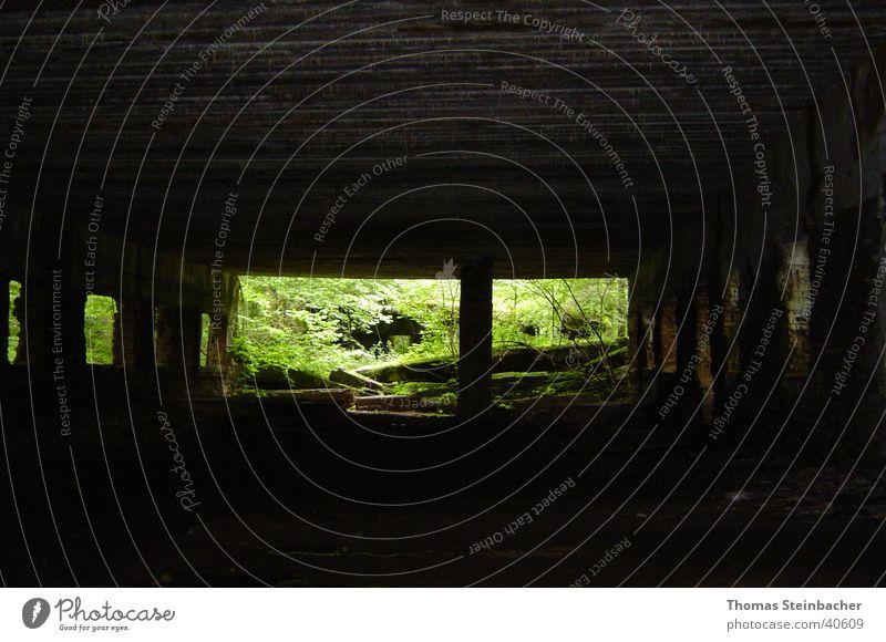 Wolfschanze Gegenlicht historisch Bunker 2. Weltkrieg