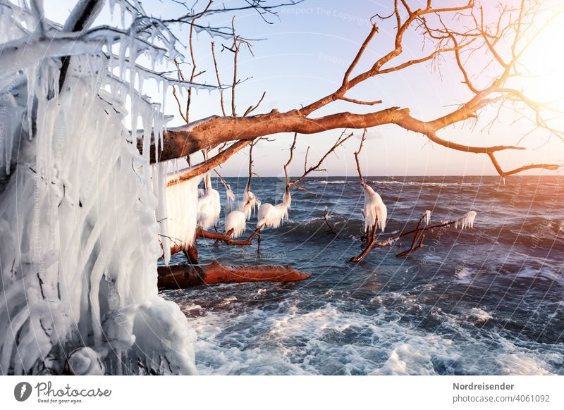 Vereistes Totholz im Winter an der Ostsee ostsee winter meer küste sonne wellen wasser eiszapfen frost sonnenstrahlen winterlandschaft baum treibholz urlaub