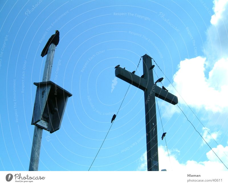 Vogelkreuzzug Himmel Rücken