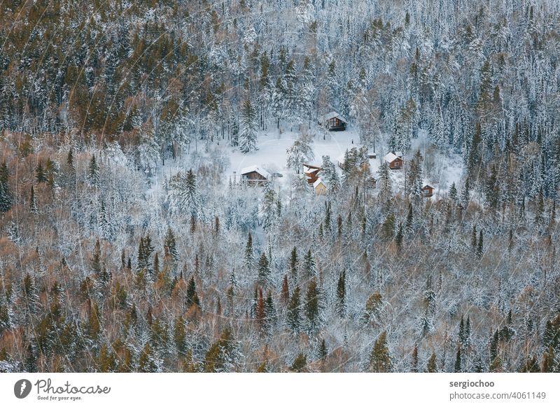 Häuser im Winterwald Vogelperspektive Jahreszeiten Frost Wald Natur Umwelt Hausbau wandern Berge u. Gebirge Holz Land Ferien & Urlaub & Reisen