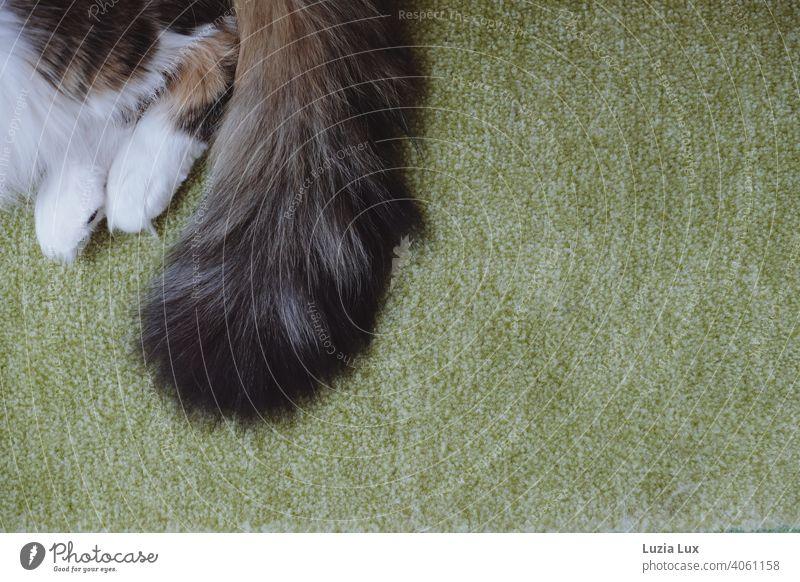 Katzenschwanz und -tatzen auf grünem Teppich, Entspannung pur Katzentatzen Tatze weiß wuschelig langhaarig getigert zottelig entspannt Hauskatze Fell Haustier
