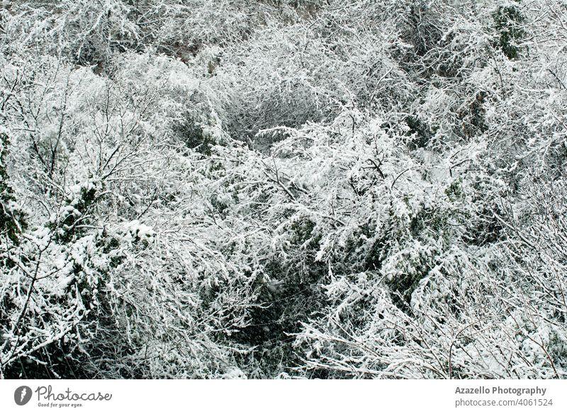 Winter Wald Hintergrund. Bäume bedeckt mit Schnee. Herbst Balken schön Schönheit Niederlassungen Ruhe Feier Weihnachten kalt Landschaft Morgendämmerung Umwelt
