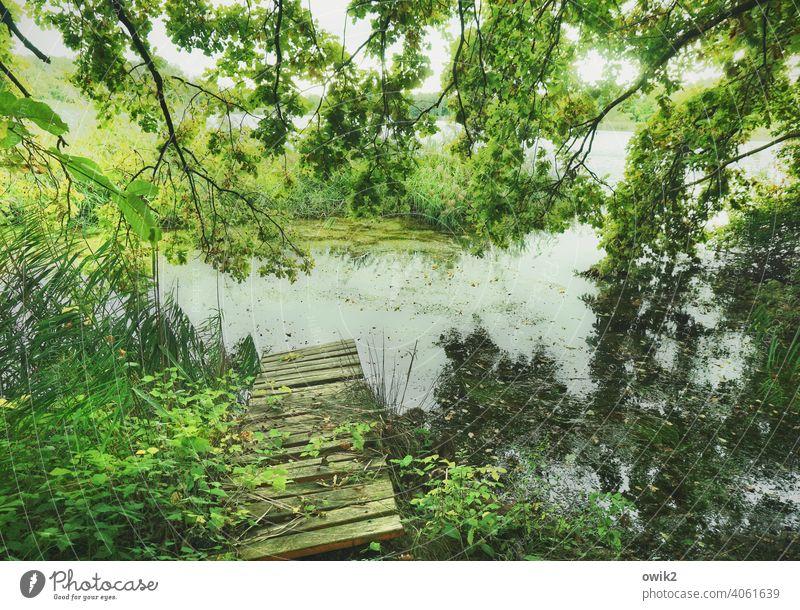 Alte Planken Steg Holz See Schönes Wetter Natur Umwelt alt einladend herausfordernd Außenaufnahme Farbfoto Bäume grün geheimnisvoll Stille verwunschen