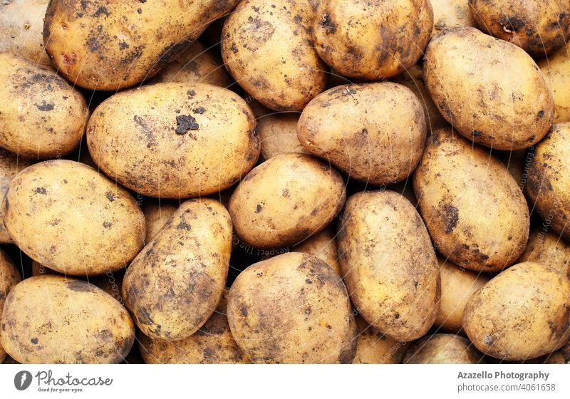 Bio-Kartoffeln ohne GVO. Ackerbau Hintergrund braun Haufen Nahaufnahme Essen zubereiten lecker Diät essen Landwirte Landwirtschaft Lebensmittel frisch grün