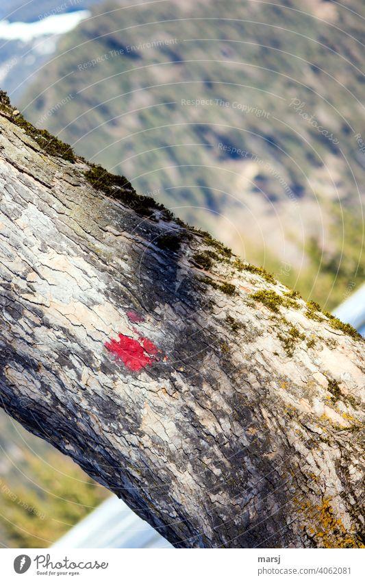 Eine    Illusion   zu glauben, dass der Baum so schief gewachsen ist und dass die roten Punkte nur Altersflecken sind. Rinde Natur Holz Baumstamm diagonal