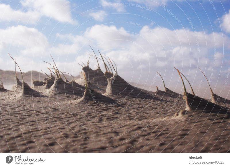 Dünen im Wind Meer Wolken Mondlandschaft Strand Sandverwehung Stranddüne Himmel