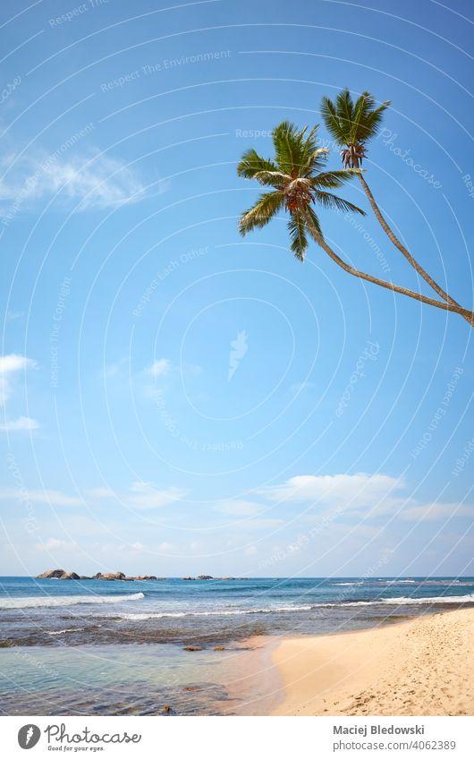 Tropischer Strand mit Kokosnusspalmen an einem sonnigen Sommertag. Paradies Meer Natur tropisch reisen Wasser MEER Sand Insel Landschaft blau idyllisch