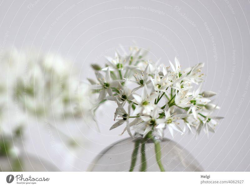 Bärlauchblüten in einer Glasvase Blume Blüte Vase blühen Frühling Frühblüher weiß grün Natur Pflanze Menschenleer Farbfoto Nahaufnahme Schwache Tiefenschärfe