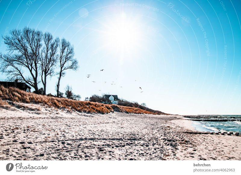 meer strand und möwen Fernweh Sehnsucht Wellen Strand Farbfoto Küste Meer Fischland-Darß frei Idylle Landschaft Himmel weite Erholung Außenaufnahme