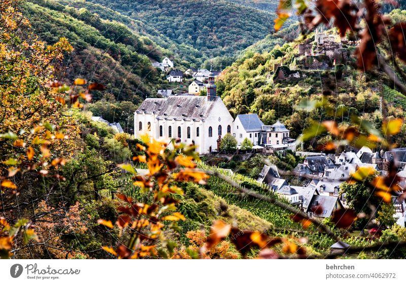 märchenmosel Sehenswürdigkeit Kirche Ruine Burg oder Schloss Kloster Farbfoto Außenaufnahme Landschaft Natur wandern Menschenleer Umwelt Wald