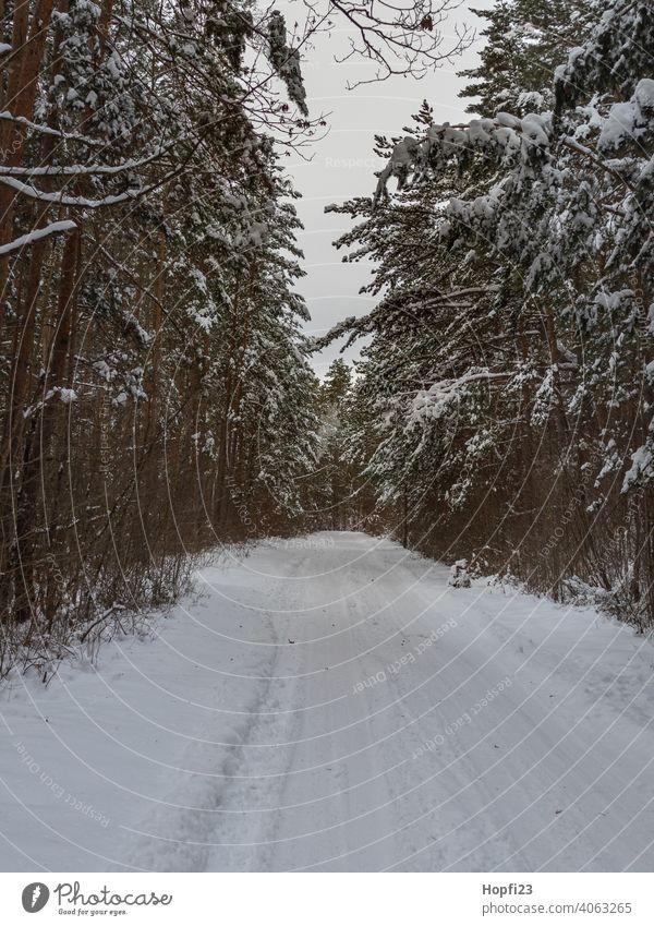 Winterlandschaft weiß Landschaft Natur Nahaufnahme ländlich Feld Ackerboden acre Schnee Sonne Sonnenschein Abendsonne kalt Himmel Baum Frost Außenaufnahme blau