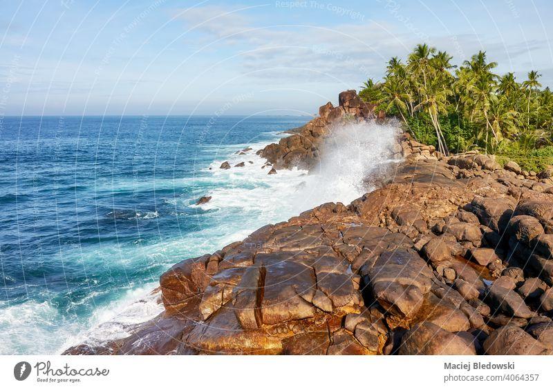 Schöne Landschaft der malerischen Westküste Sri Lankas. schön Küste Felsen MEER Handfläche Wasser Sommer sonnig Natur Meer Wetter Meereslandschaft Horizont