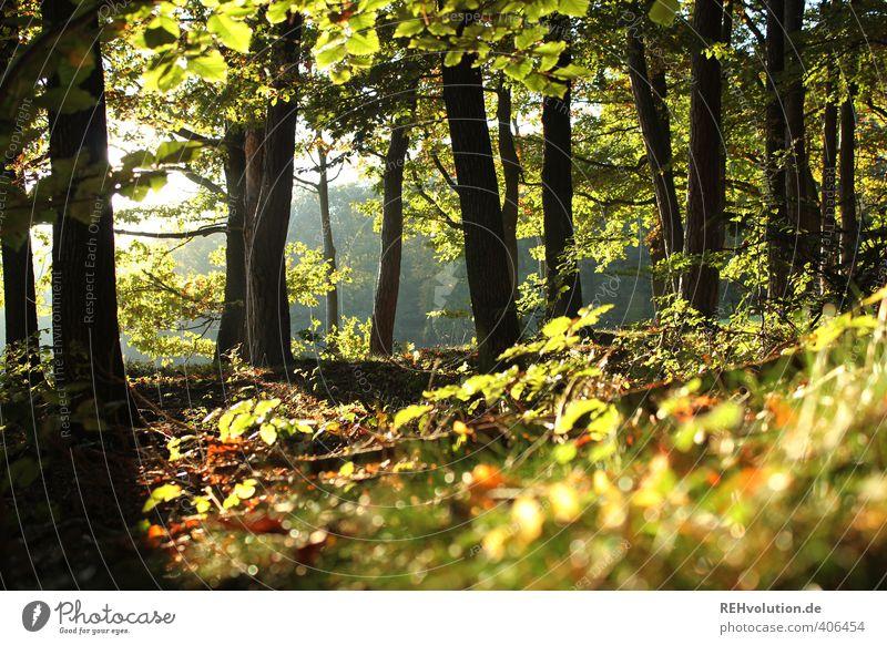 """""""Ich verbringe mehr Zeit im Wald als ein Eichhörnchen!!"""" Umwelt Natur Pflanze Baum Sträucher natürlich grün Hoffnung nachhaltig Holz Laubwald Erholung"""