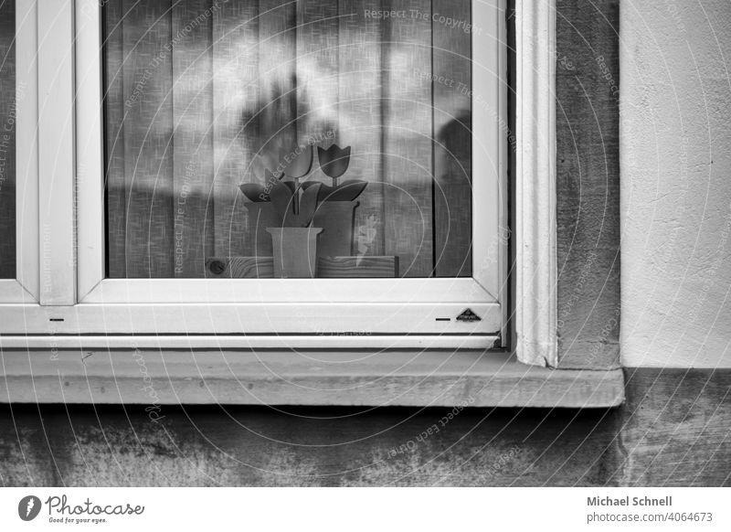 Fenster mit Holzblumen Haus Architektur Fassade Menschenleer trist Tristesse traurig Schwarzweißfoto schwarzweiß