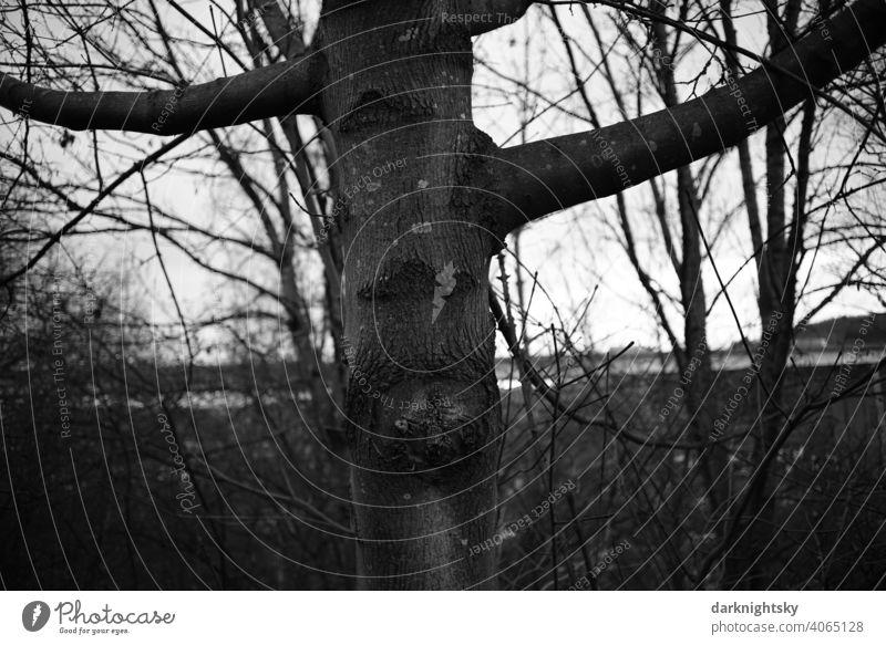 Baum Stamm mit Ästen und fehlerhaften schadhaften Stellen Himmel Baumstamm Ast Winter Wolken Außenaufnahme Natur Zweig Schatten schwarz hoch