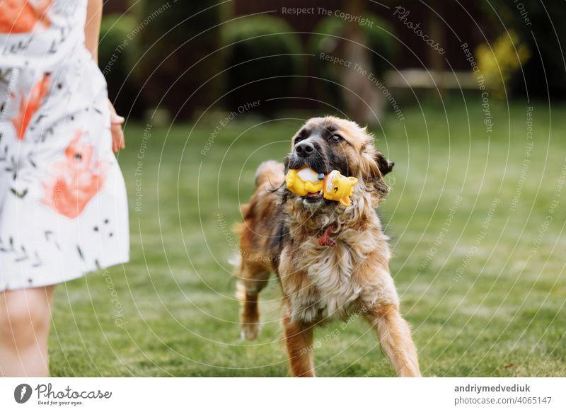 Ein süßes kleines Mädchen spielt mit ihrem Haustier Hund draußen auf Gras zu Hause. Foto unscharf wegen der laufenden Hund Kind Tier Kindheit wenig Freundschaft