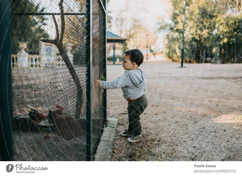 Kind füttert Hühner im Käfig Kindheit Seitenansicht 1-3 Jahre Kaukasier füttern Tierliebe Hähnchen Federvieh Farbfoto Tag Außenaufnahme Mensch Natur Kleinkind