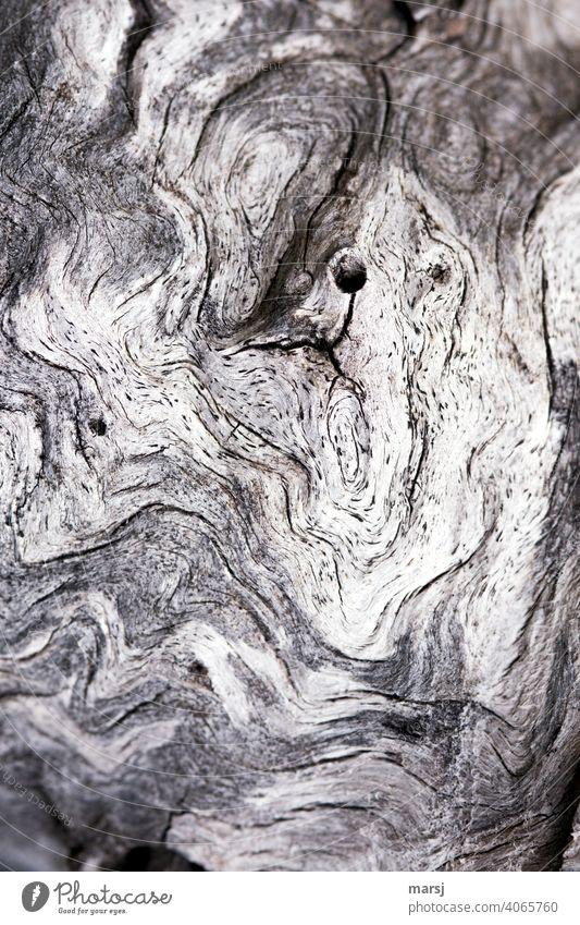 Alterserscheinung. Eigenwillige Strukturen und Formen auf einem ausgebleichten Stück Holz einzigartig alt Lebenslinie eigenwillig knotig Patina undefinierbar