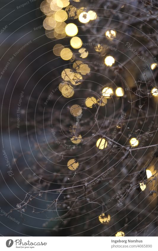 Feenlicht auf Zweigen Lichterkette Bokeh Bokeh Lichter Bokeh Hintergrund Zweige u. Äste Abendstimmung Dekoration & Verzierung festlich Unschärfe