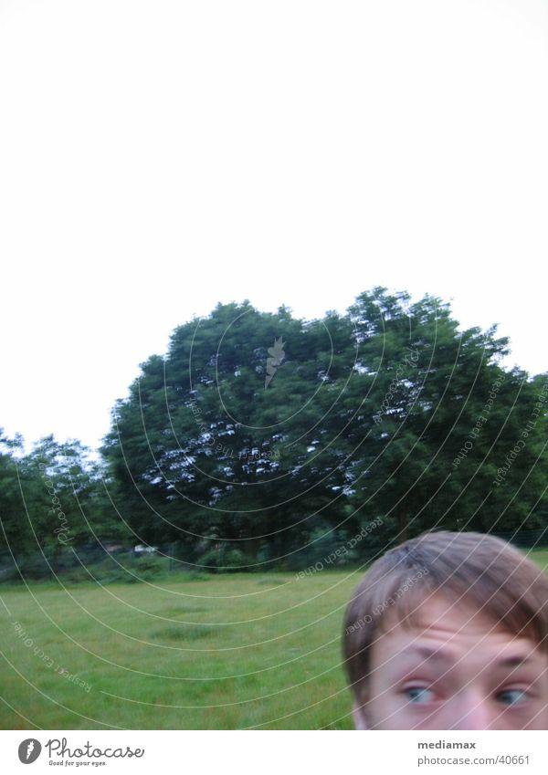 Angst im Park Mensch Baum Auge Junge Wiese Suche erstaunt Anschnitt staunen