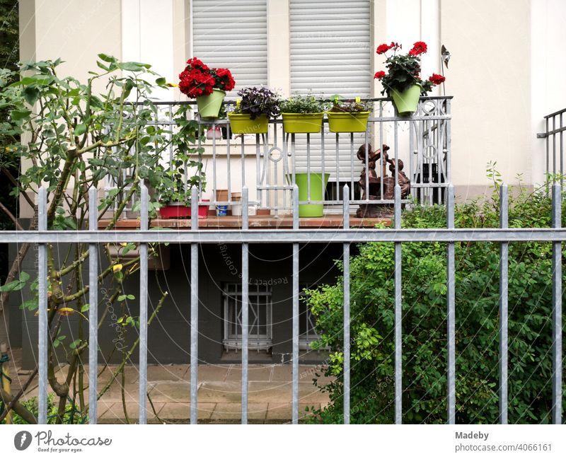 Balkon im Hochparterre eines restaurierten Altbau mit dekorativen Blumenkästen und Pflanzen im Nordend von Frankfurt am Main in Hessen Fassade Garten Vorgarten