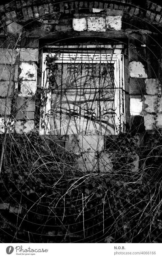Vergittertes Fenster mit Gestrüpp in Schwarzweiß Schwarzweißfoto schwarzweiß Gitterfenster Außenaufnahme Fassade Menschenleer Gebäude Mauer Wand trist Tag