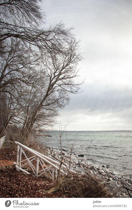 ein besuch am meer. Meer Wasser Strand Wellen Treppengeländer Baum Küste Himmel Ostsee Außenaufnahme Ferien & Urlaub & Reisen Natur Erholung Landschaft